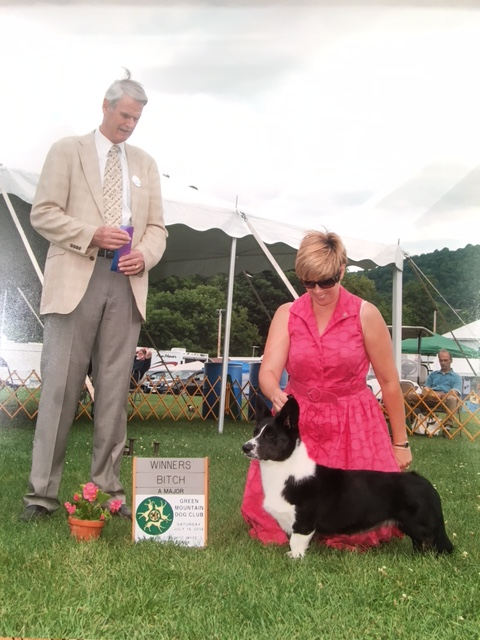 Dandi's Second Major with Professional Handler Tuni