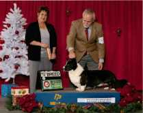 Boomer's retired as a special in Dec 2013, Multiple group winner and outstanding stud dog. This was his last win as a special.