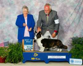 Winning Best of Breed under Breeder Judge Leah James