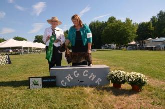 Sparky with Handler Tracie Zietz at the 2015 Western Reserve Cardigan Speciality