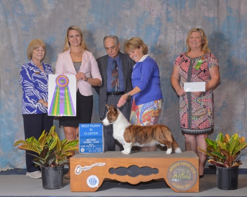 Winning BEST PUPPY IN CLUSTER with professional handler Sherri Hurst