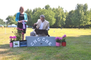 Winning RWB under Breeder Judge Emily Fish. From the puppy class to boot.