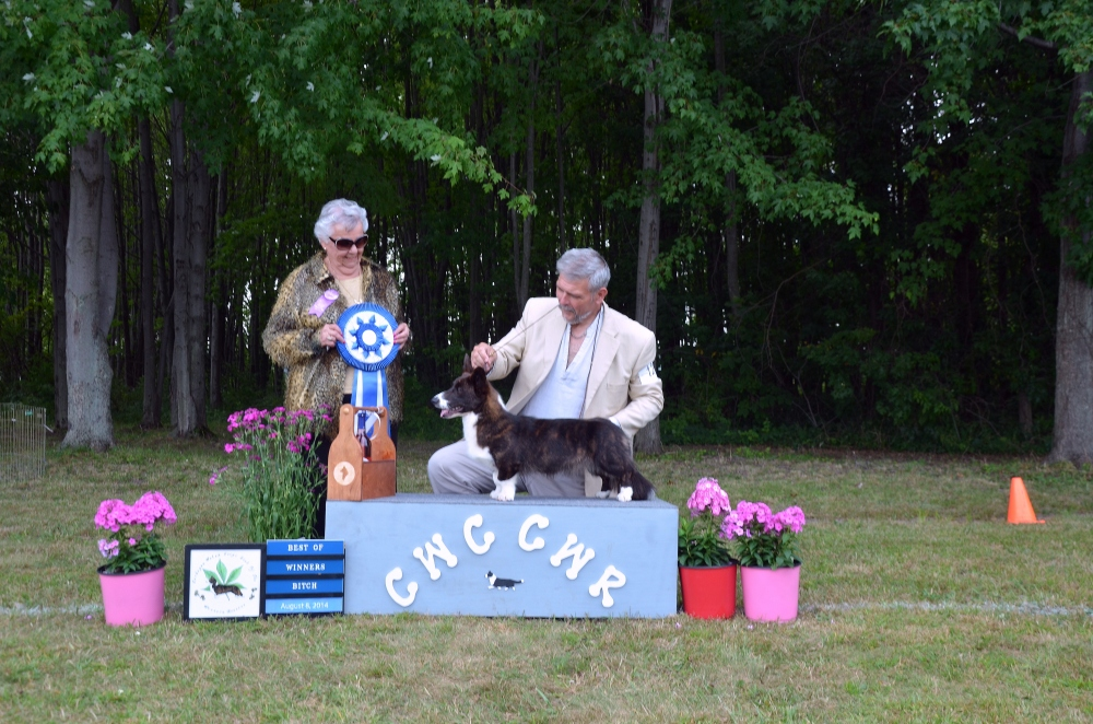 A big win under Breeder Judge Leah James  2014 Regional Specialty in Oberlin, Ohio.