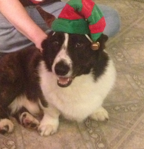 Boomer the Elf
