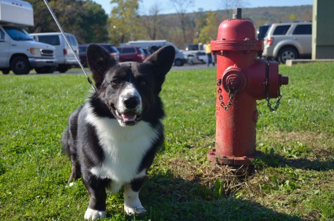 Cracker can't decide which is more important, mom or the hydrant