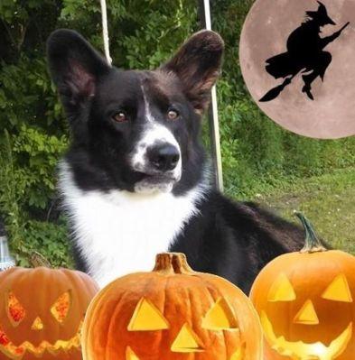Cracker looking pretty spooky for Halloween