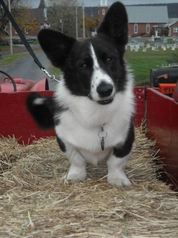 Boomer loves a good hay ride