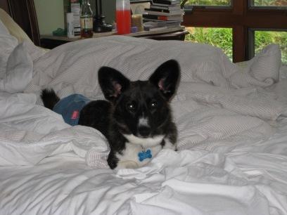 Cute little Jilly ready for bedtime