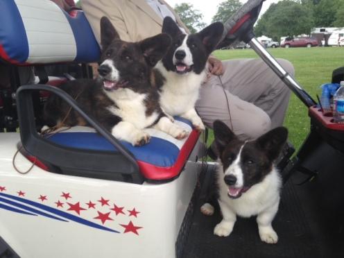 Pups LOVE the Golf Cart