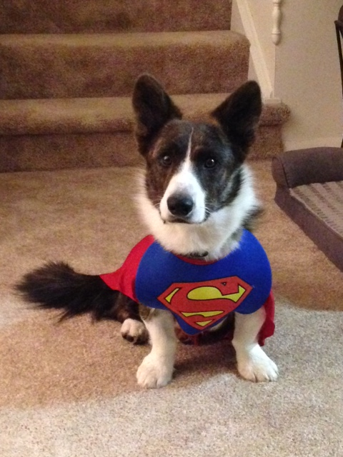 Super Schooner ready for Halloween