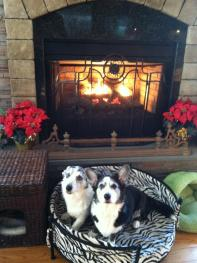 Dulcie & Morgan the Christmas Corgis